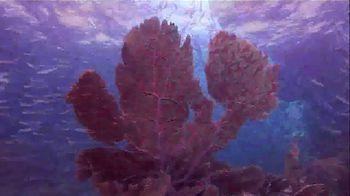 The Florida Keys & Key West TV Spot, 'Diving' - Thumbnail 8