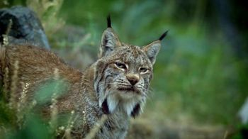 Blue Buffalo Wilderness Cat Food TV Spot, 'Lynx Spirit' - Thumbnail 1