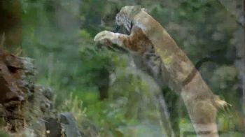 Blue Buffalo Wilderness Cat Food TV Spot, 'Lynx Spirit'