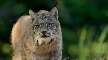 Blue Buffalo Wilderness Cat Food TV Spot, 'Lynx Spirit' - Thumbnail 3
