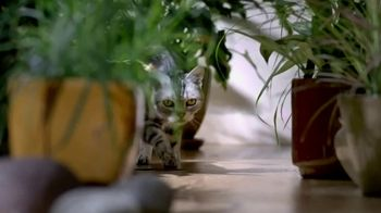 Blue Buffalo Wilderness Cat Food TV Spot, 'Lynx Spirit' - Thumbnail 7