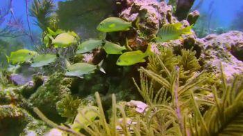 The Florida Keys & Key West TV Spot, 'Preserve, Conserve, and Protect'