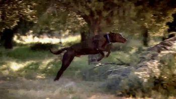 Blue Buffalo Wilderness Dog Food TV Spot, 'Wolf Spirit' - Thumbnail 2