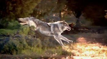 Blue Buffalo Wilderness Dog Food TV Spot, 'Wolf Spirit'