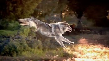 Wolf Spirit thumbnail