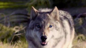 Blue Buffalo Wilderness Dog Food TV Spot, 'Wolf Spirit' - Thumbnail 4