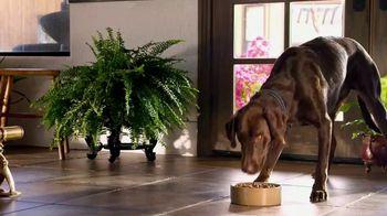Blue Buffalo Wilderness Dog Food TV Spot, 'Wolf Spirit' - Thumbnail 7