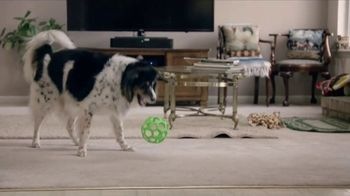 Purina Pro Plan Bright Mind Adult 7+ TV Spot, 'Lady: Mental Sharpness' - Thumbnail 6