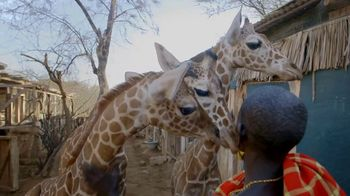 San Diego Zoo Global Wildlife Conservancy TV Spot, 'Save Giraffes' - Thumbnail 6