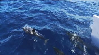 Visit Maui TV Spot, 'Land, Air and Sea' - Thumbnail 7