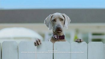 K9 Advantix II TV Spot, 'Blooper Reel' - Thumbnail 3