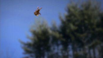 Catseye Pest Control TV Spot, 'Carpenter Ant Treatment: Removal & Control' - Thumbnail 9