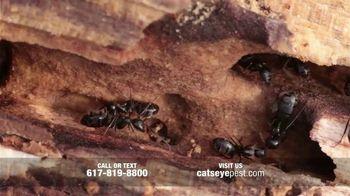 Catseye Pest Control TV Spot, 'Carpenter Ant Treatment: Removal & Control' - Thumbnail 3