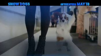 Show Dogs - Thumbnail 9