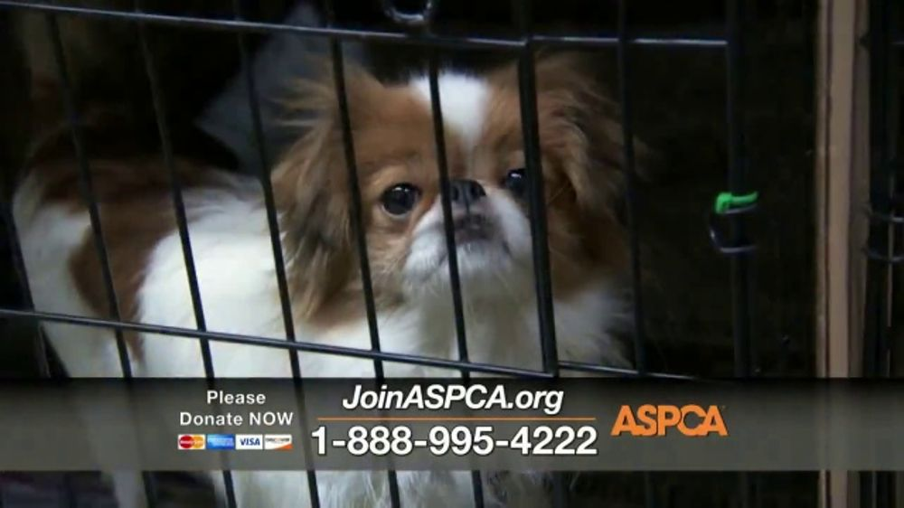 ASPCA TV Commercial, 'April Is Prevention of Cruelty to Animals Month'