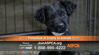 ASPCA TV Spot, 'April Is Prevention of Cruelty to Animals Month' - Thumbnail 8