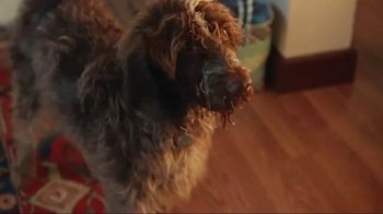 Discover Card Social Security Number Alerts TV Spot, 'Dog Kiss' - Thumbnail 9