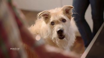 Bravecto TV Spot, 'Protect Your Dog From Fleas & Ticks' - Thumbnail 5