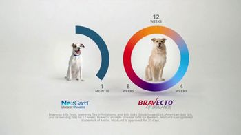 Bravecto TV Spot, 'Protect Your Dog From Fleas & Ticks' - Thumbnail 9