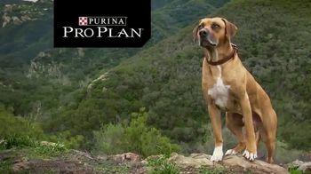 Purina Pro Plan TV Spot, 'Possibilities' - Thumbnail 1