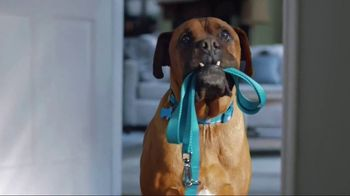 Zoetis TV Spot, 'Itching for Help' - Thumbnail 3