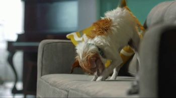 Zoetis TV Spot, 'Itching for Help' - Thumbnail 8