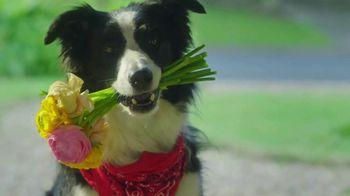Cosequin TV Spot, 'Romeo' - Thumbnail 8