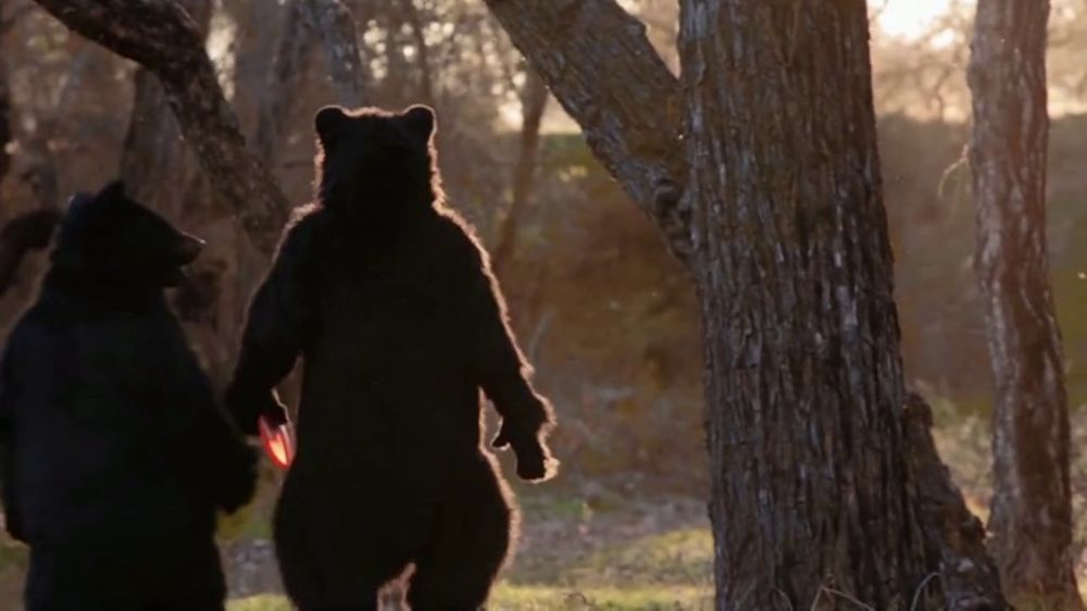 Black Bear Diner TV Commercial, 'Disc Golf Bear'