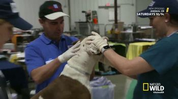 American Humane Association TV Spot, 'Nat Geo WILD: Harvey Victims' - Thumbnail 5