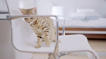 Litter-Robot TV Spot, 'Spend More Time Loving Your Cat'