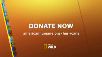 American Humane Association TV Spot, 'Nat Geo WILD: Hurricane Harvey' - Thumbnail 10