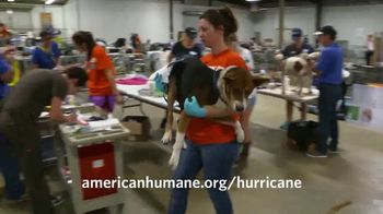 American Humane Association TV Spot, 'Nat Geo WILD: Hurricane Harvey' - Thumbnail 5