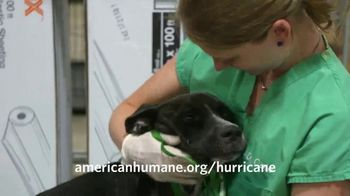 American Humane Association TV Spot, 'Nat Geo WILD: Hurricane Harvey' - Thumbnail 7