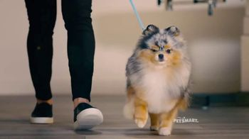 PetSmart Grooming TV Spot, \'Runway\' Song by Meghan Trainor