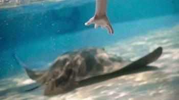 SeaWorld TV Spot, 'Lo real' [Spanish] - Thumbnail 2