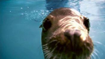 SeaWorld TV Spot, 'Lo real' [Spanish] - Thumbnail 5