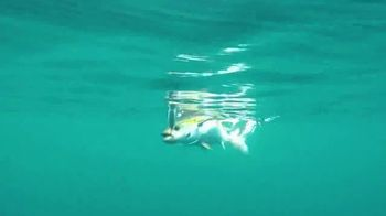 Los Buzos Panama TV Spot, 'Your Next Bucket List Fishing Destination' - Thumbnail 4