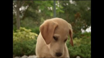Southeastern Guide Dogs TV Spot, 'When You Lose Hope' - Thumbnail 8