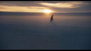 Penguins - Thumbnail 10