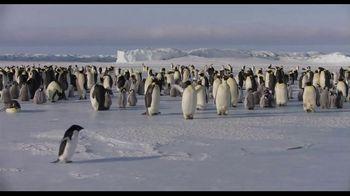 Penguins - Thumbnail 3