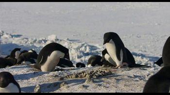 Penguins - Thumbnail 5