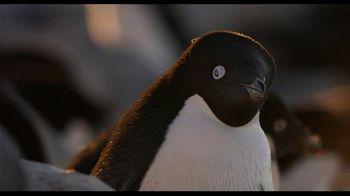 Penguins - Thumbnail 6