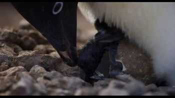 Penguins - Thumbnail 7