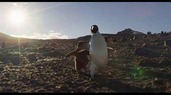Penguins - Thumbnail 8