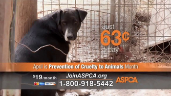 ASPCA TV Spot, 'Agonizing Conditions' - Thumbnail 8