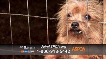 ASPCA TV Spot, 'Agonizing Conditions' - Thumbnail 4