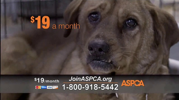 ASPCA TV Spot, 'Agonizing Conditions' - Thumbnail 5