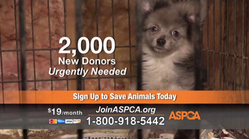 ASPCA TV Spot, 'Agonizing Conditions' - Thumbnail 6