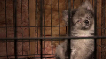 ASPCA TV Spot, 'Prevention of Cruelty to Animals Month' - Thumbnail 1