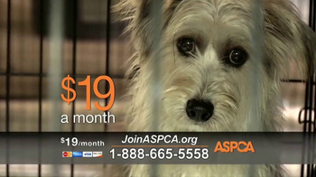 ASPCA TV Spot, 'Prevention of Cruelty to Animals Month' - Thumbnail 4
